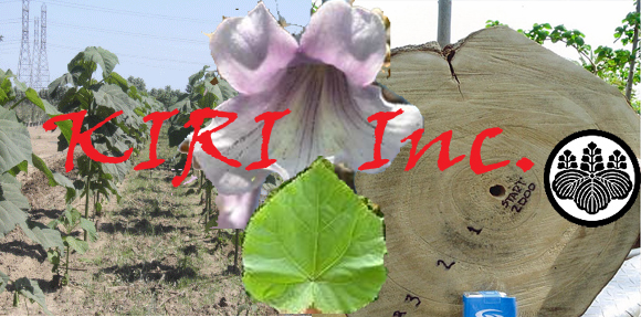 The Kiri Tree - Kiri Inc. - Sustainable Angels